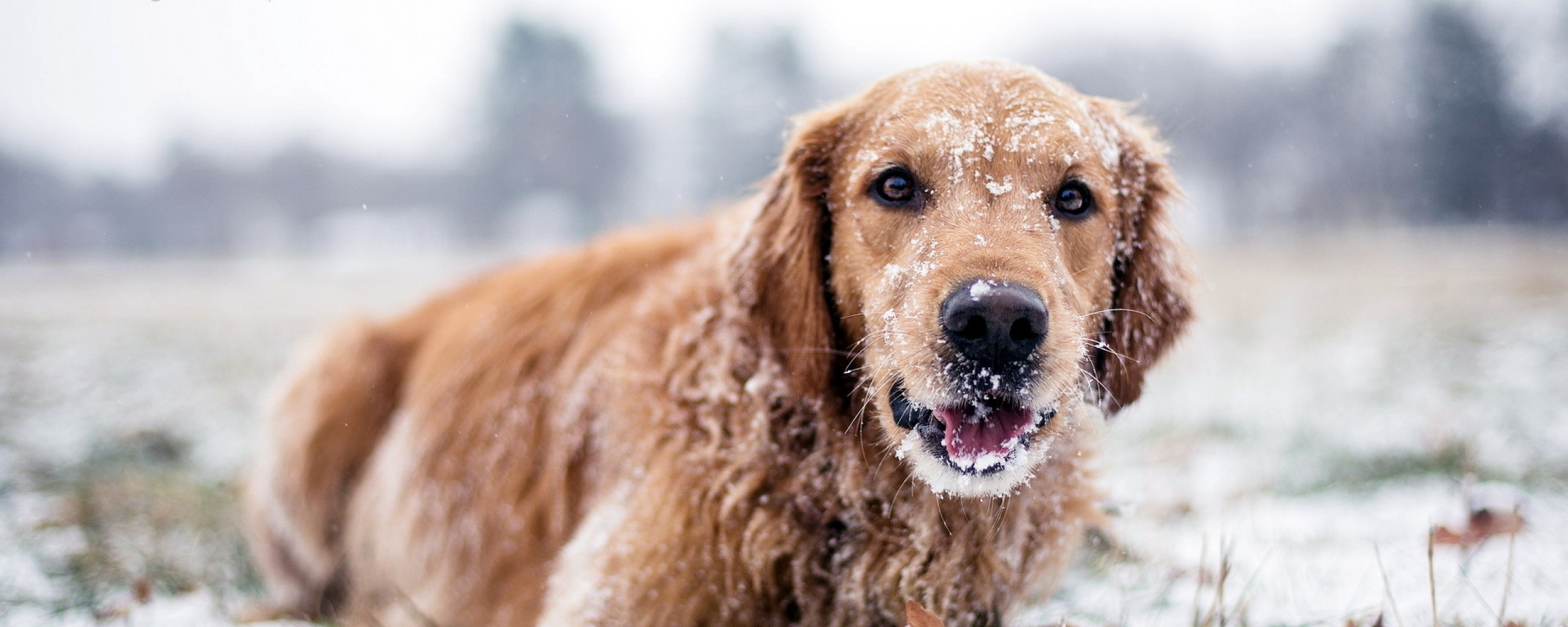 winter_dog_snow_72596_2560x1024