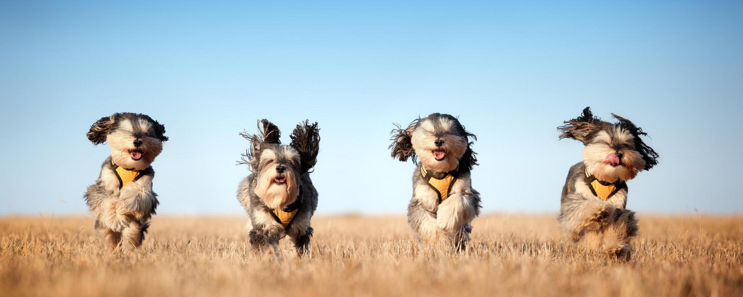 dog_run_grass_wind_93303_2560x1024
