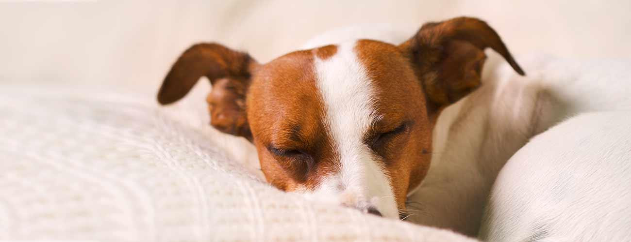 dogsleeping2